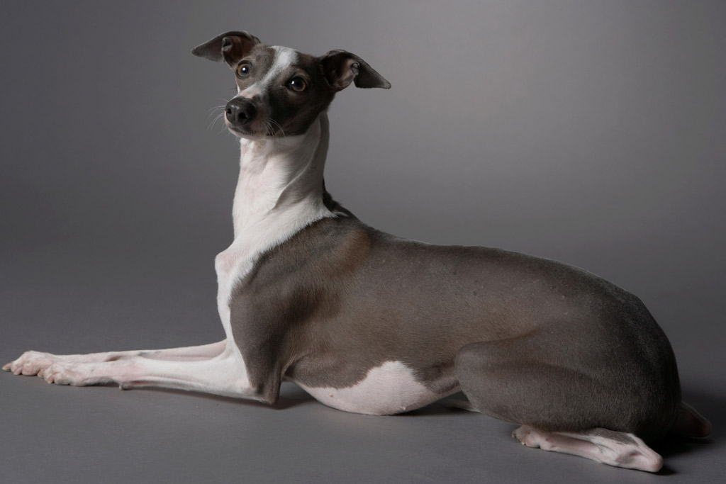 dog-exercise-push-up-down