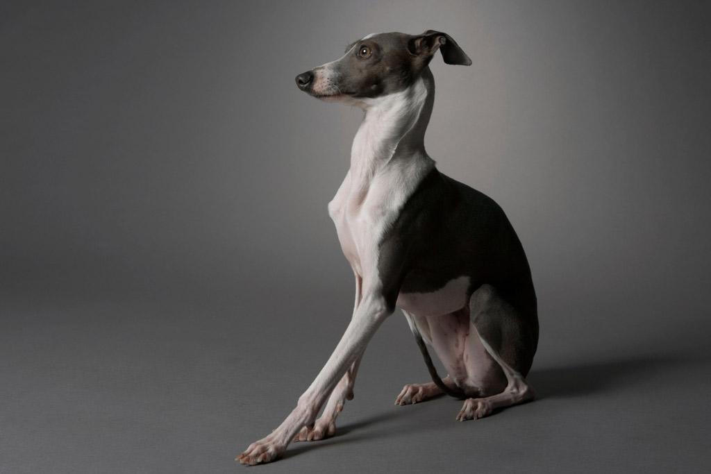dog-exercise-push-up-sit