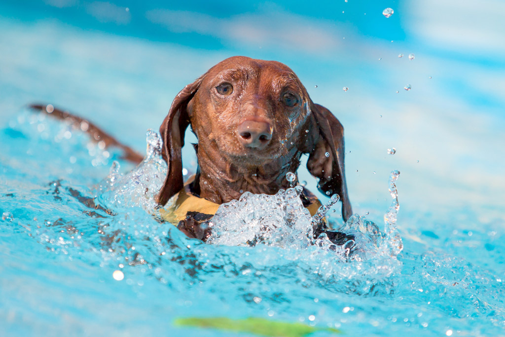 dog-exercise-swimming-classes