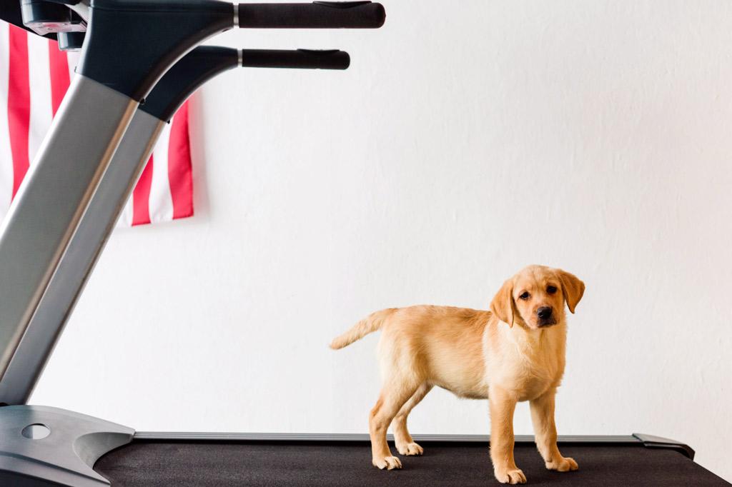 dog-exercise-treadmill