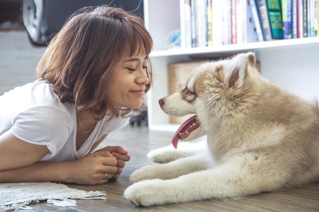 dog-eye-contact-body-language