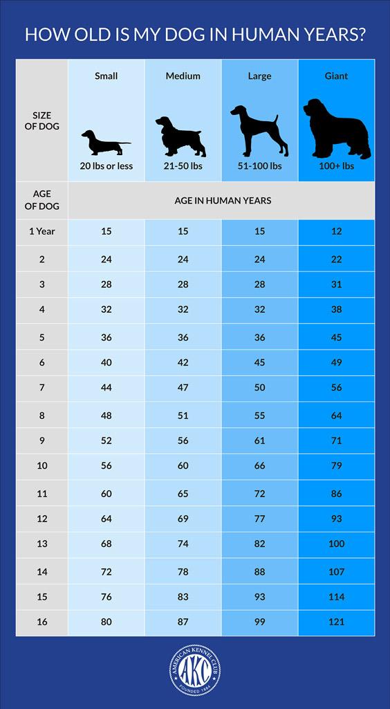 dog-facts-age-AKC-chart