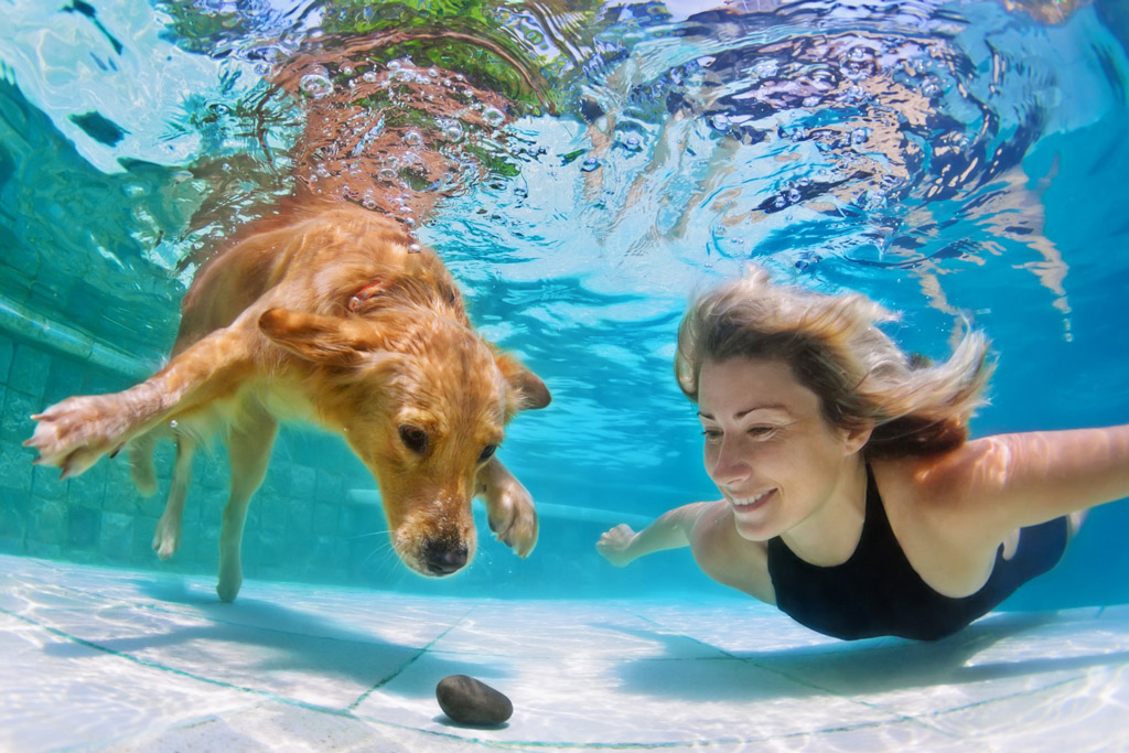 dog-facts-swimming