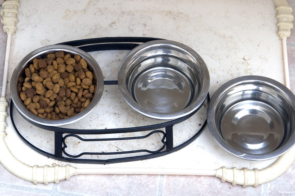 dog-feeder-solution