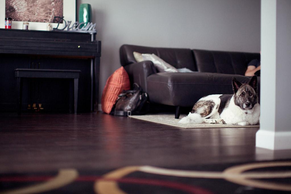 dog-friendly-safe-home