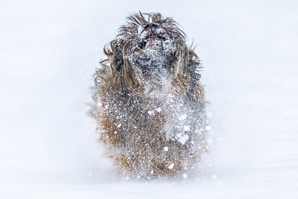 dog-fun-in-snow