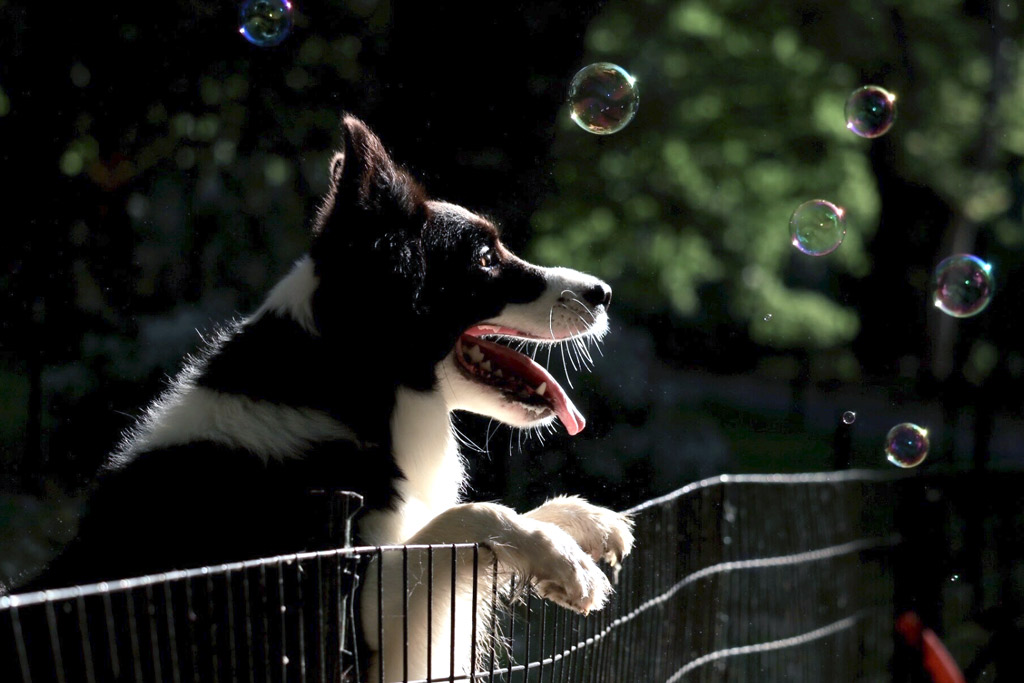 dog-games-chasing-bubbles-outdoors