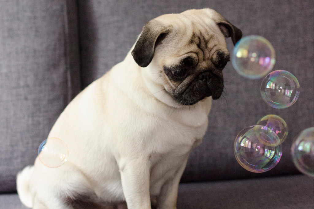 dog-games-chasing-bubbles