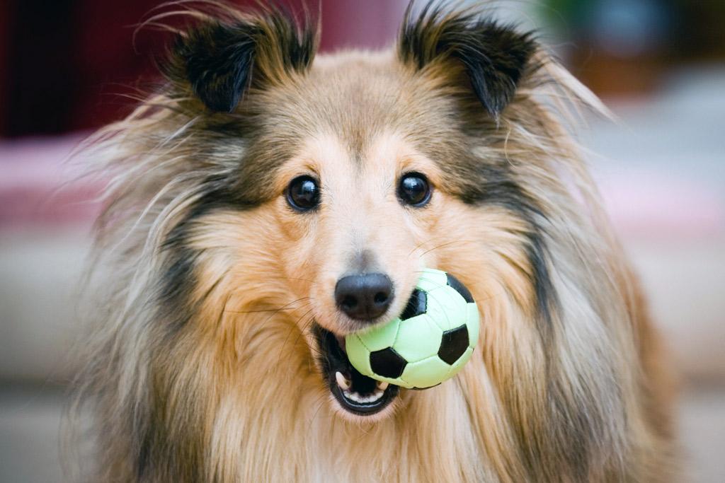 dog-games-fetch-indoors