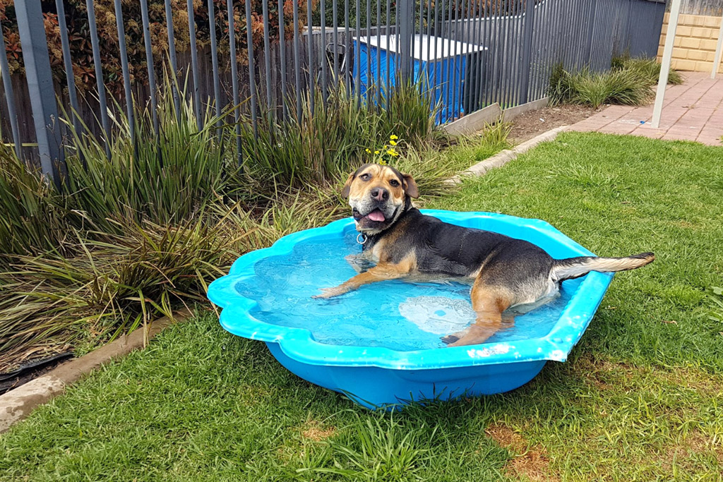 dog-games-pool