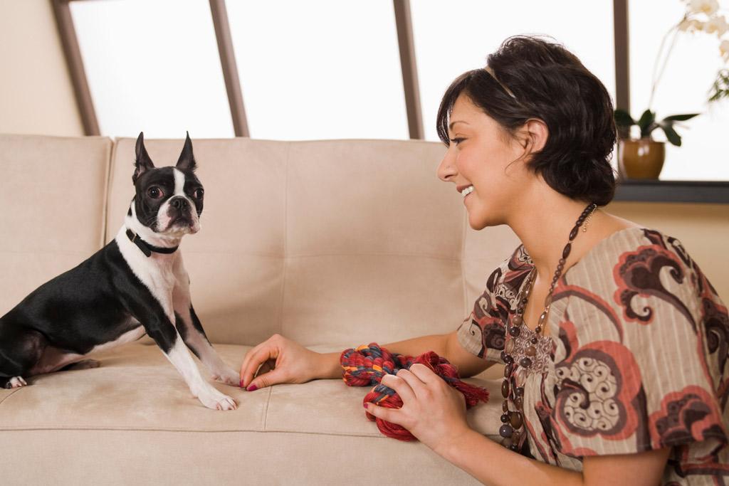 dog-games-tug-indoors-1