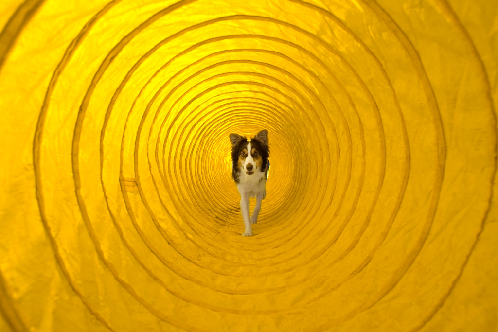 dog-games-tunnel-indoors