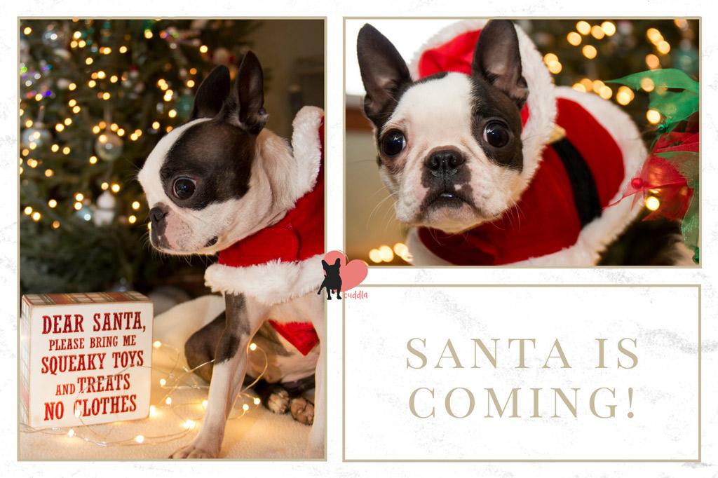 dog-gift-ideas-for-christmas