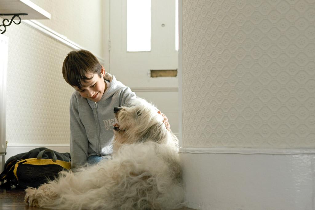 dog-greeting