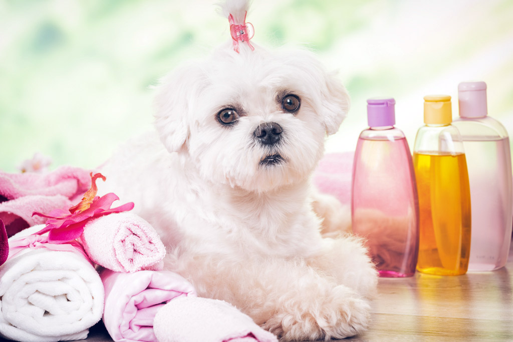 dog-grooming-at-home-tips