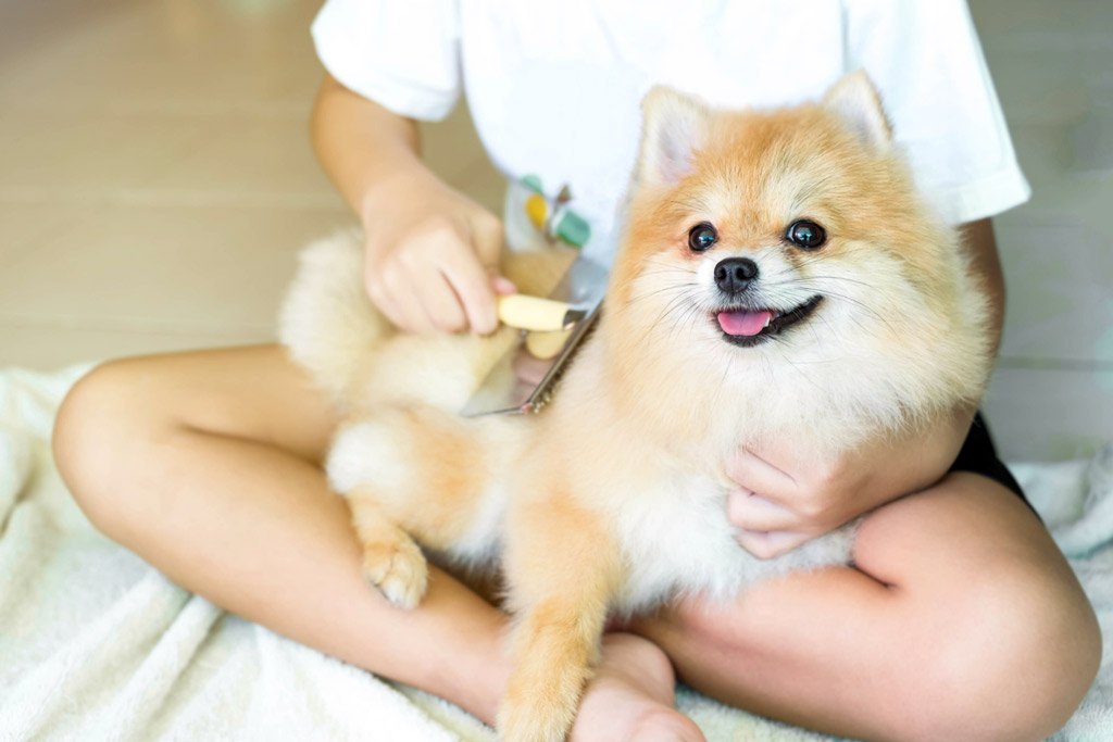 dog-grooming-brushing-routine
