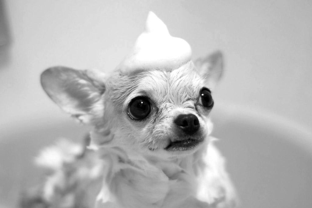 dog-grooming-shampoo