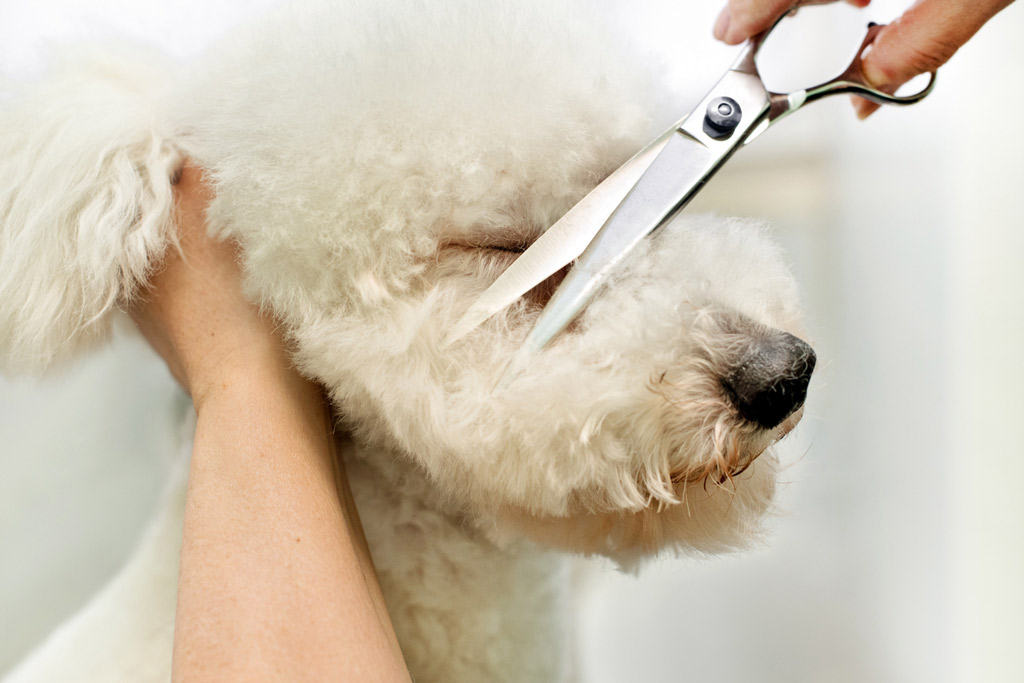 dog-grooming-trimming-hair
