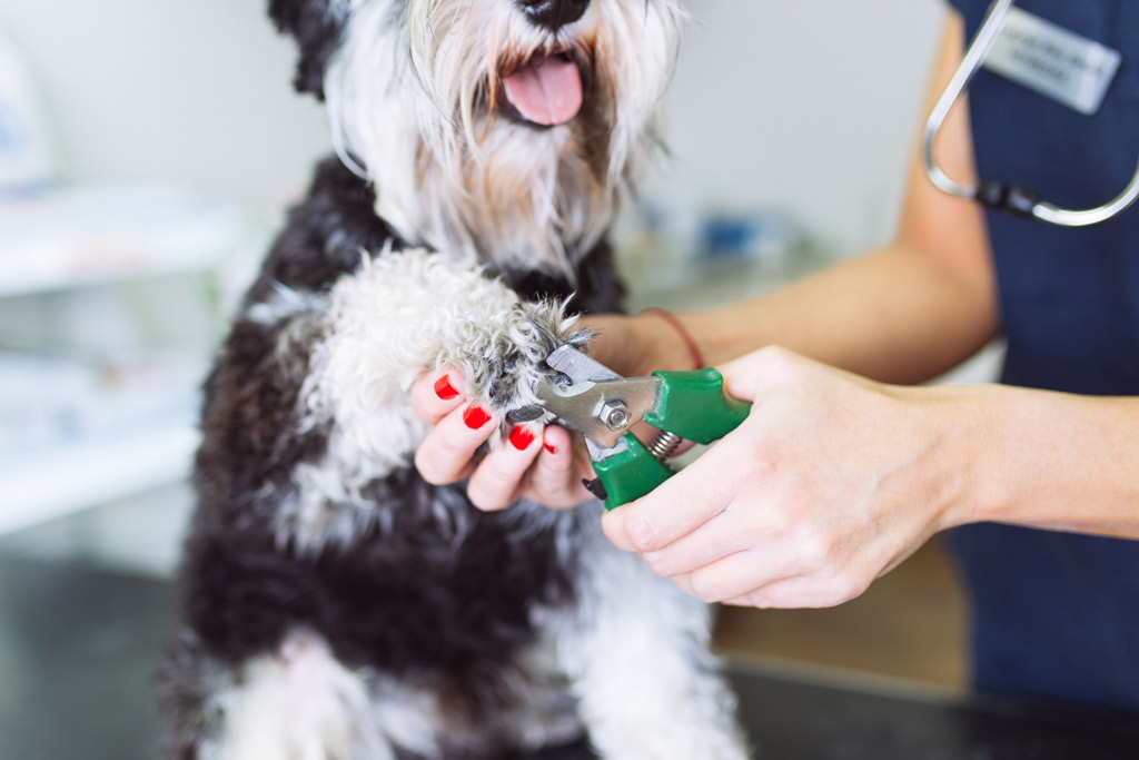 dog-grooming-trimming-nails