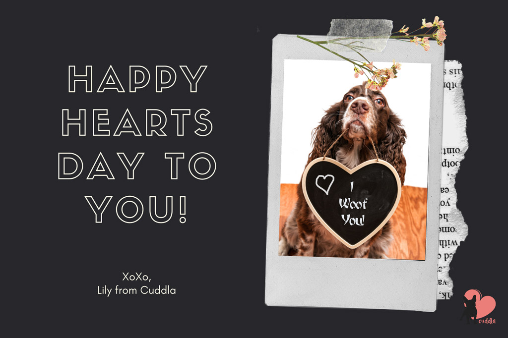 dog-happy-valentines-day