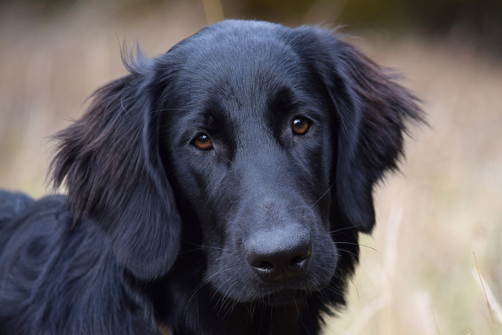 dog-healthy-coat