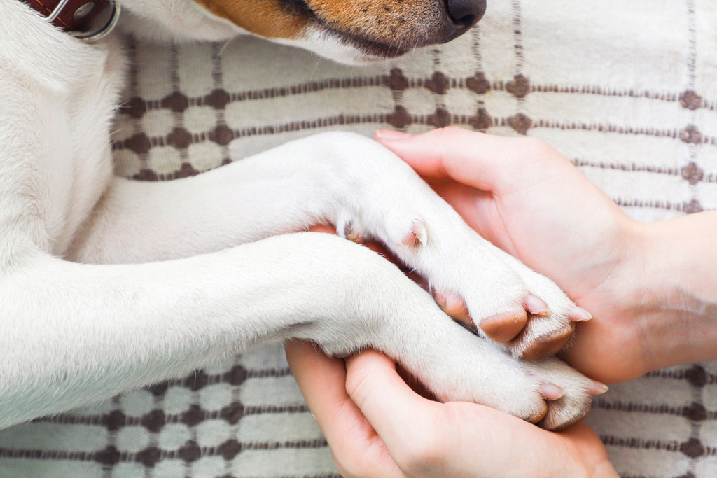 dog-healthy-paws-and-nails