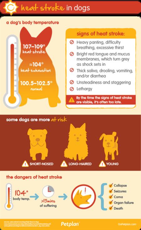 dog-heatstroke-risks
