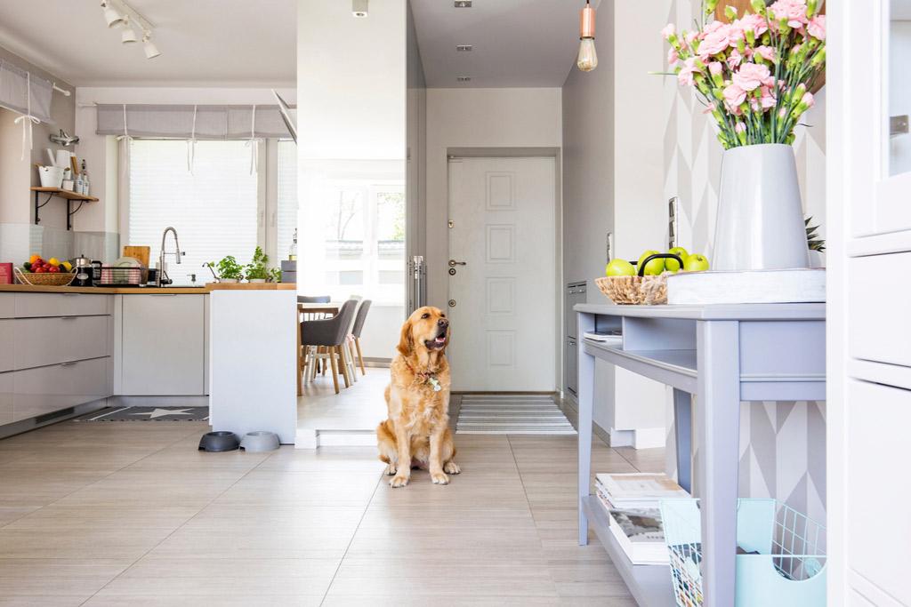 dog-home-alone-behaviour