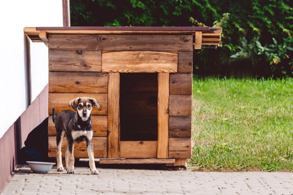 dog-house-outdoors
