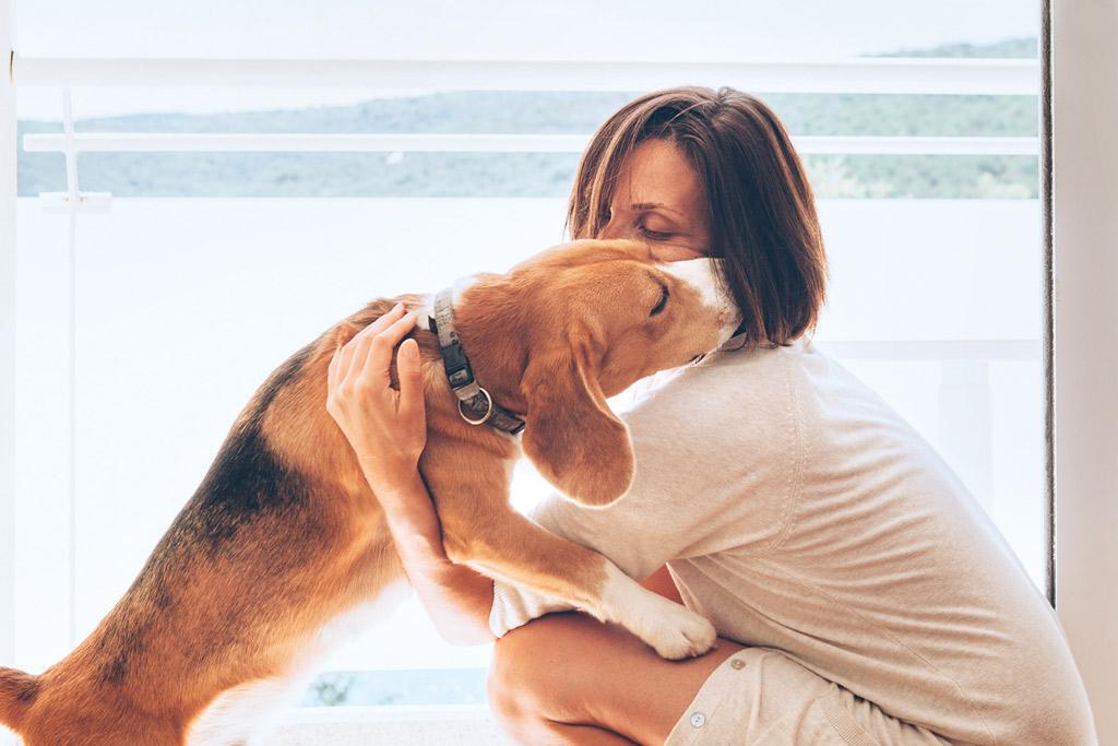 dog-jumping-body-language