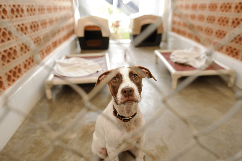 dog-kennel-boarding