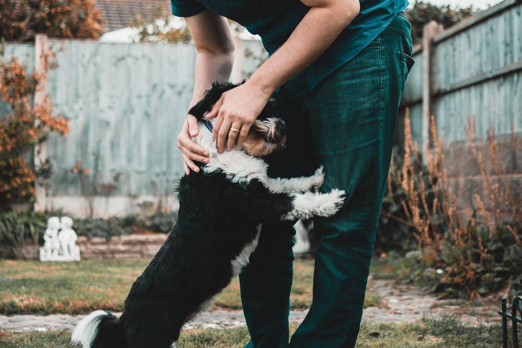 dog-leaning-body-language