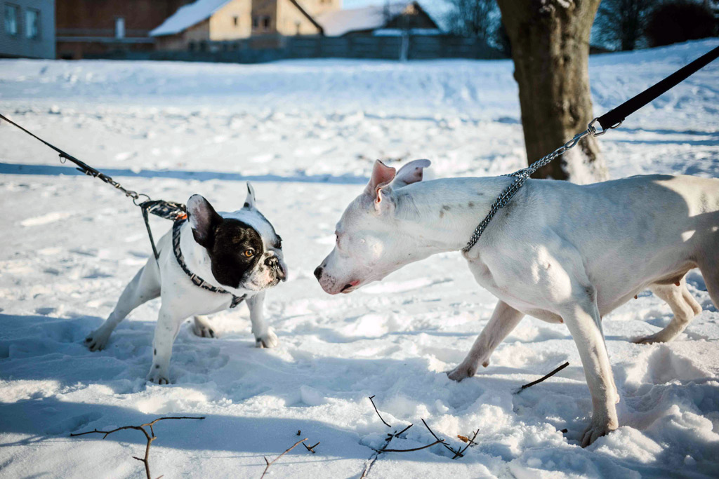 dog-meet-up