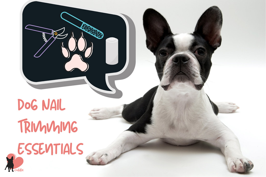 dog-nail-trimming-essentials