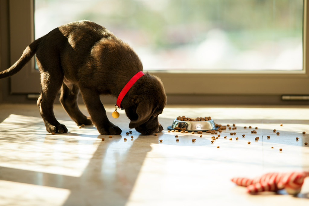 dog-nutrition-for-puppies