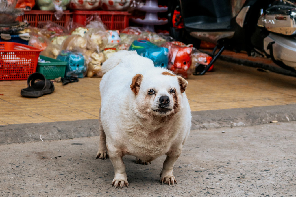 dog-obesity-problems