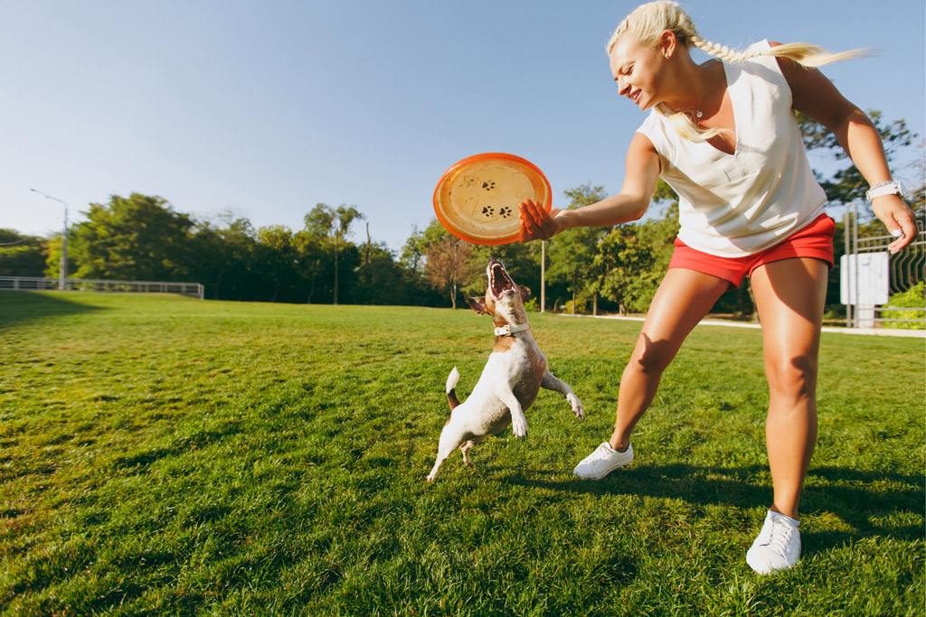 dog-play-fetch-frisbee