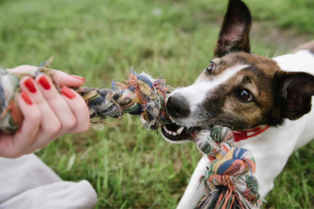 dog-play-tug-with-rope