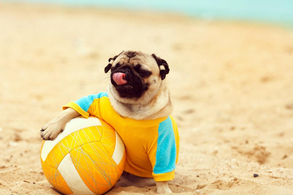 dog-playing-at-beach