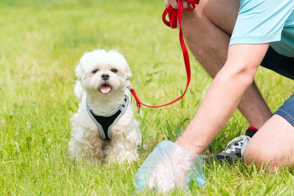 dog-potty-training