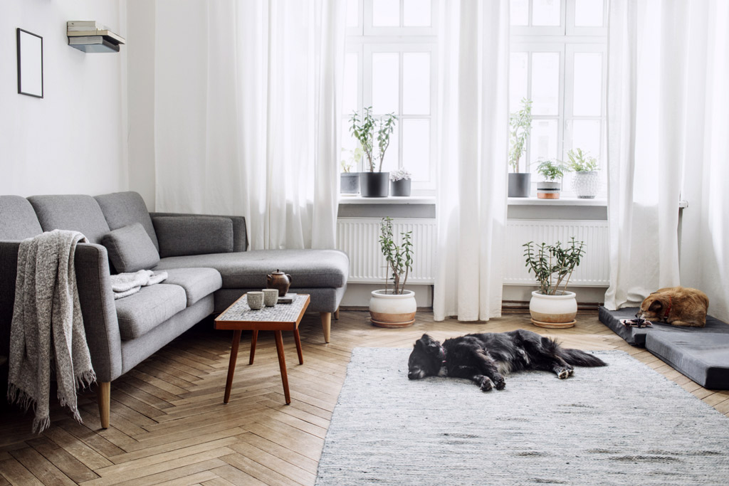 dog-proof-your-home