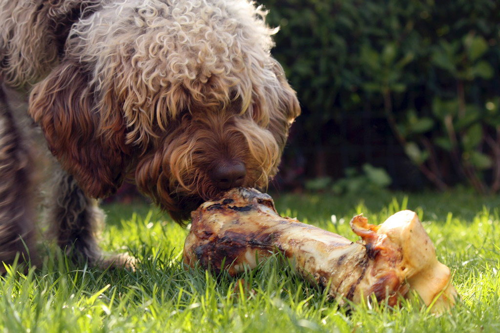 dog-raw-food-bone