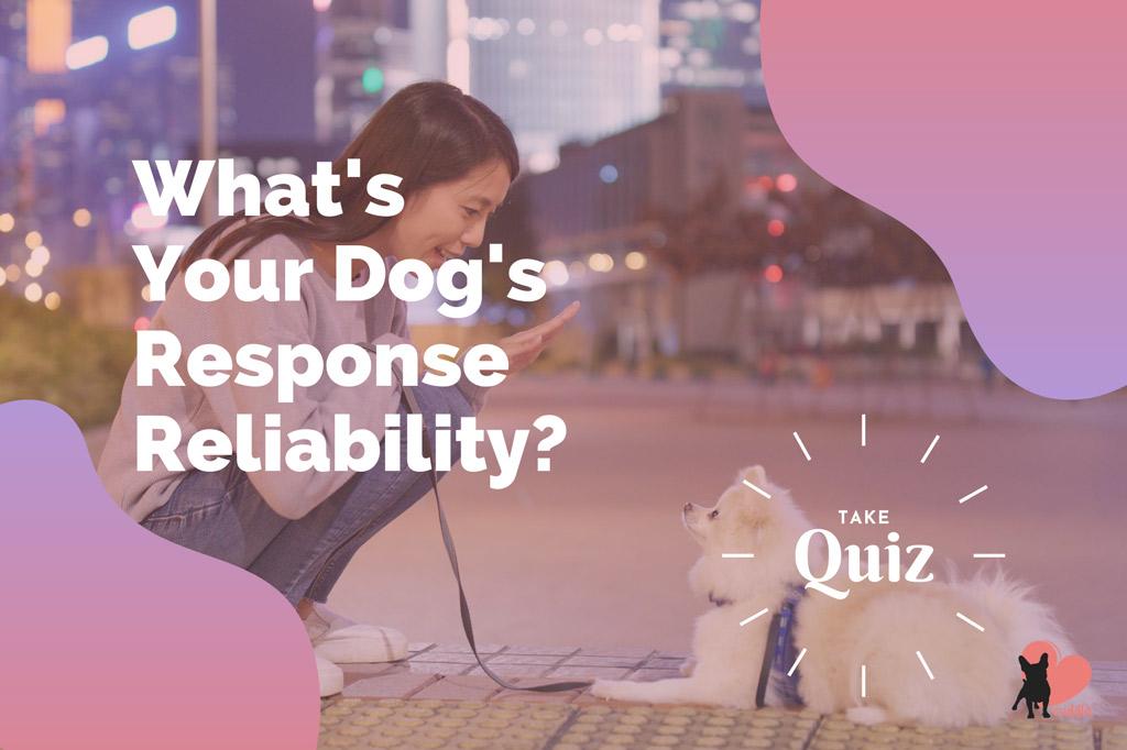 dog-response-quiz