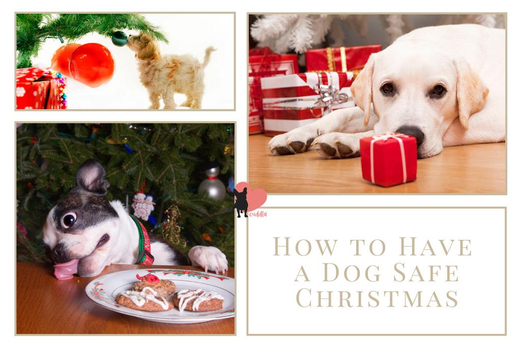 dog-safe-christmas