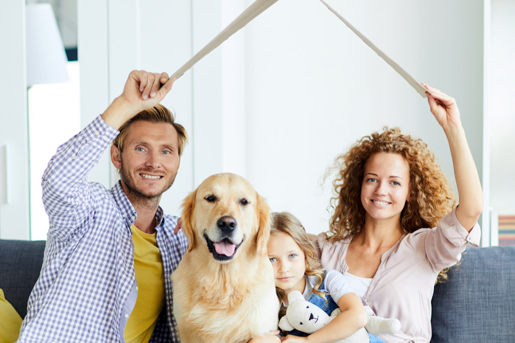 dog-safe-zone-at-home