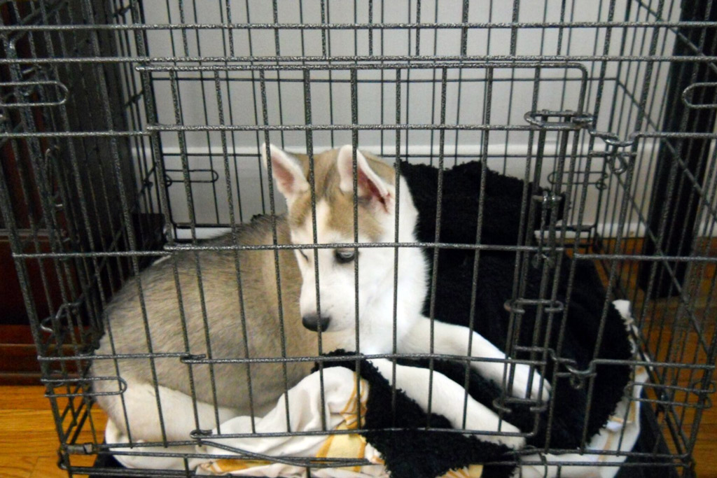 dog-safe-zone-crate