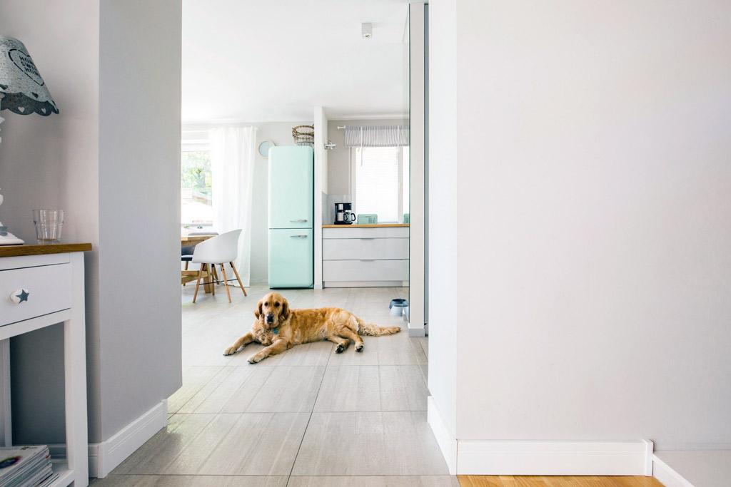 dog-safe-zone-selection
