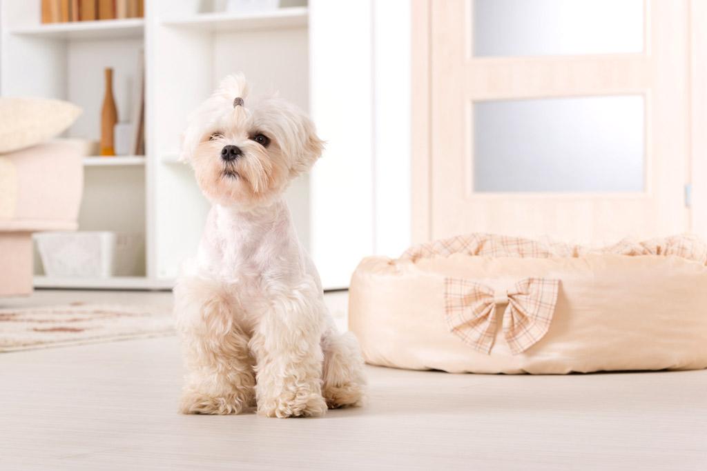 dog-safe-zone