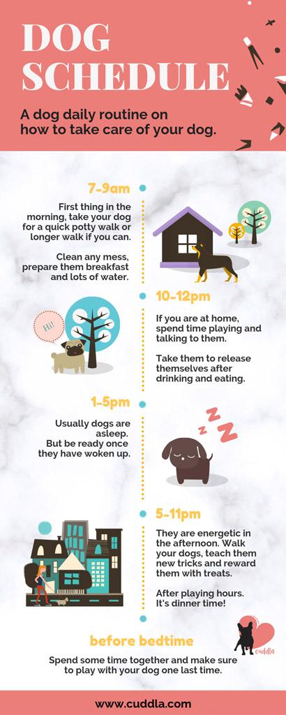 dog-schedule