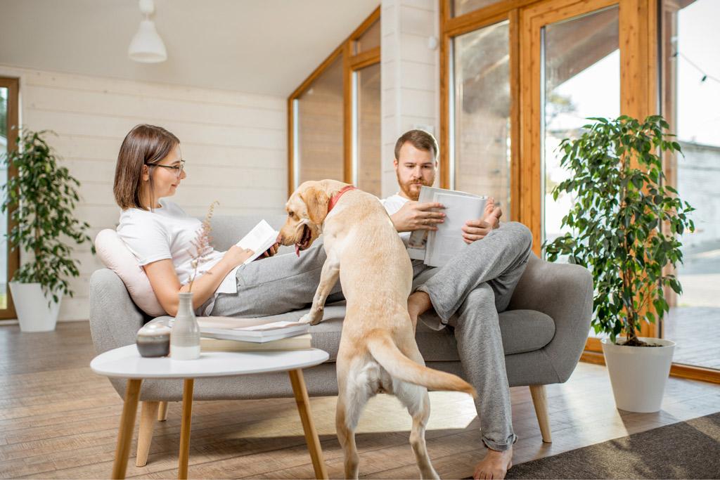 dog-seeking-attention
